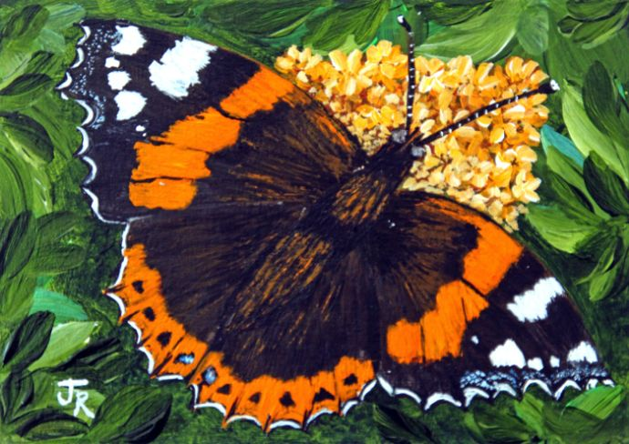 Red Admiral Butterfly **Sold**