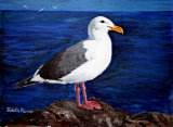 Seagull - SOLD (COMMISSION)