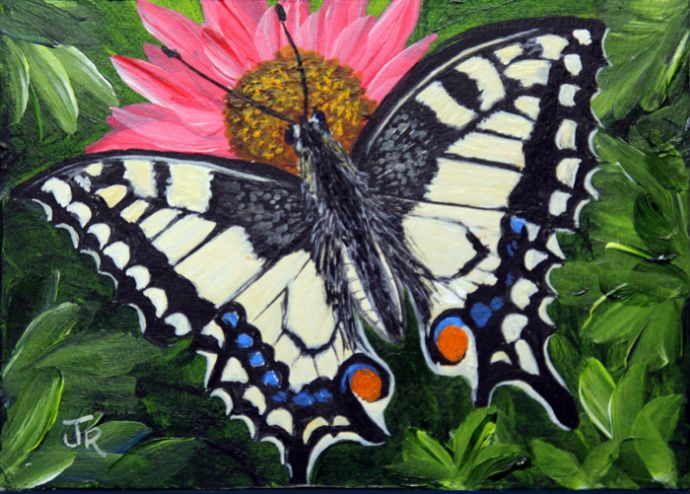 Swallowtail Butterfly **Sold**