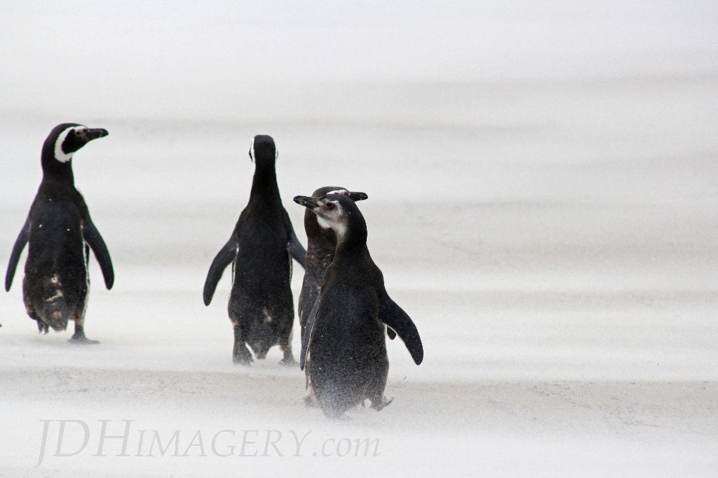Juveniles in the wind