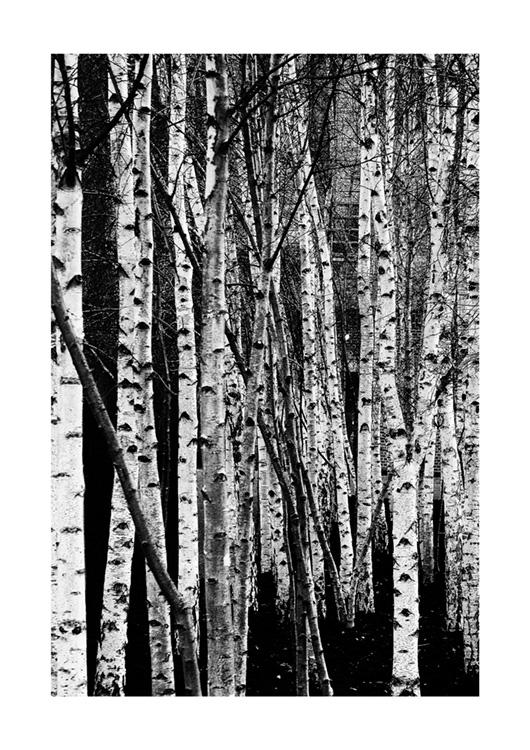 Tate Willows