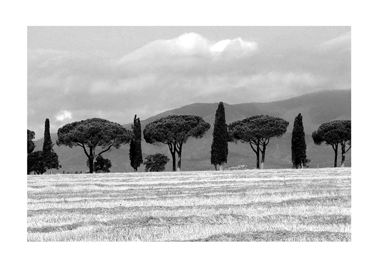 Tuscany Trees