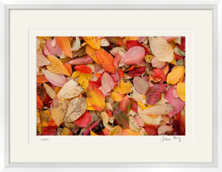 Autumn Leaf Colour
