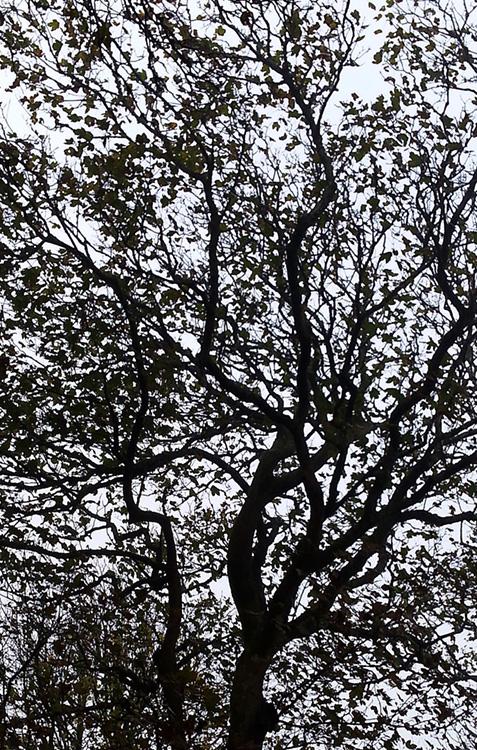 Tree Silhouete