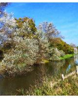 Oxney Canal
