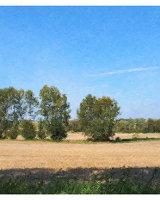 Oxney Plains