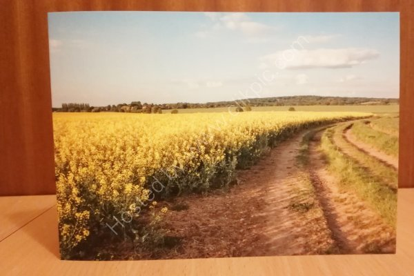 Rapeseed fields greeting cards