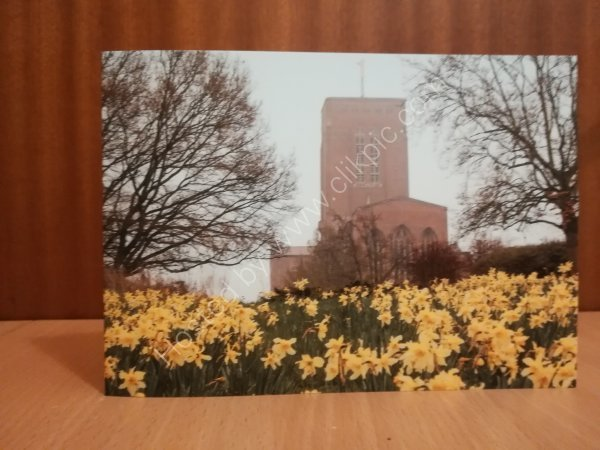 Guildford Cathedral daffodils greeting card