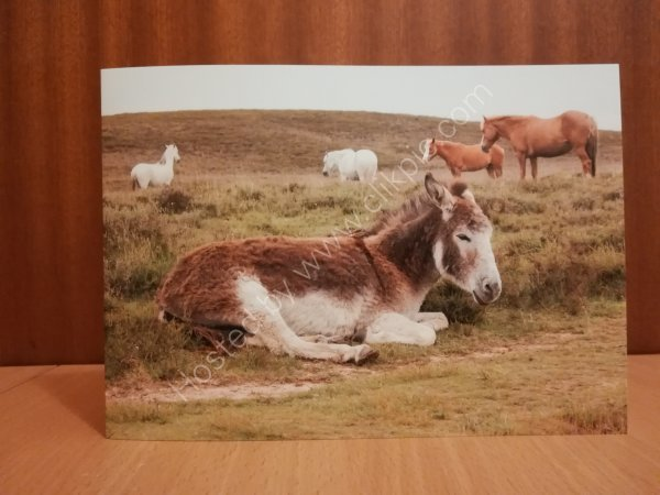 Life in the New Forest greeting card