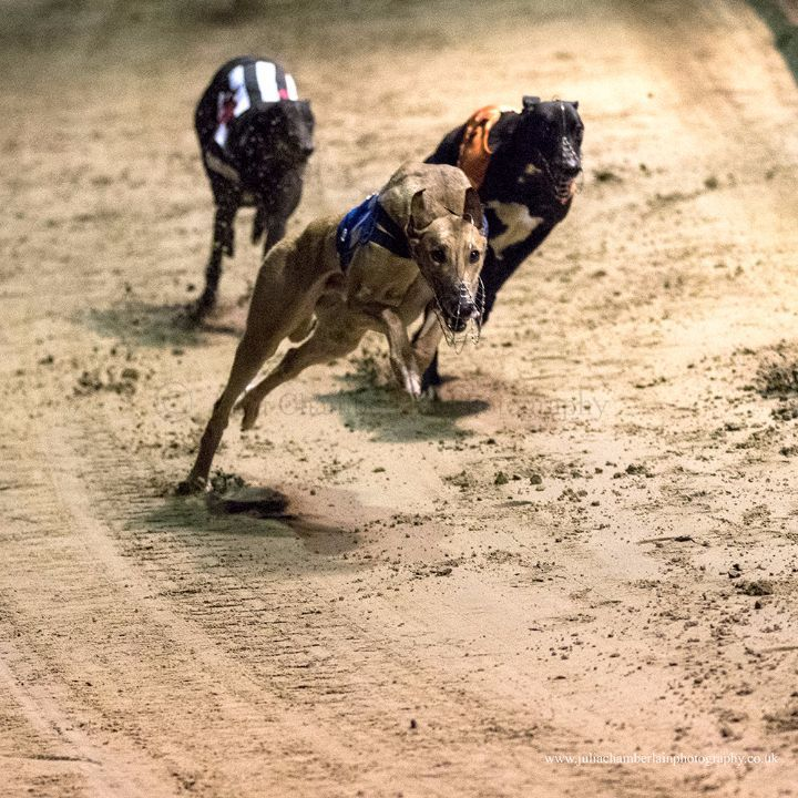 Race-8-11th-March-201702