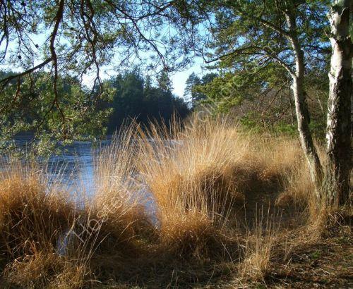 Thursley common surrey, pond photograph