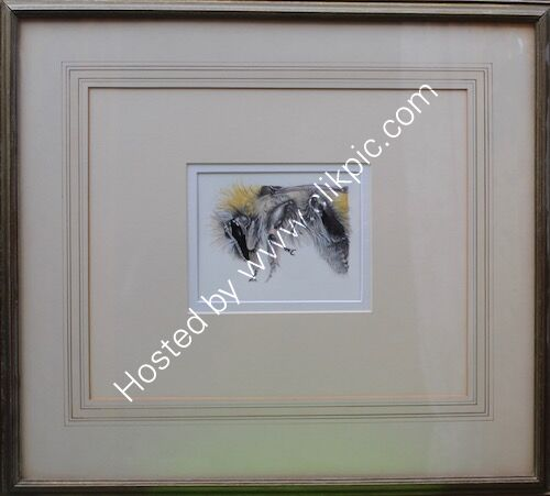 framed drawing, bee,