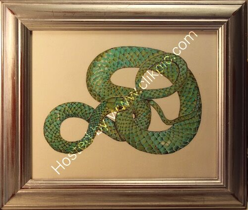 green snake, framed drawing