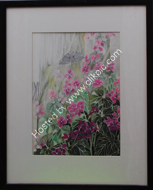 framed drawing lunaria