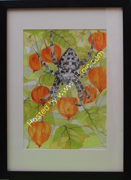 spider and physalis, framed drawing