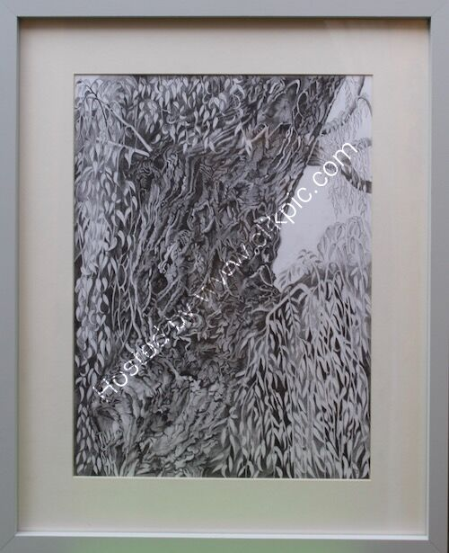 willow tree, framed drawing