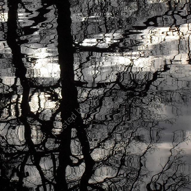 February reflections III