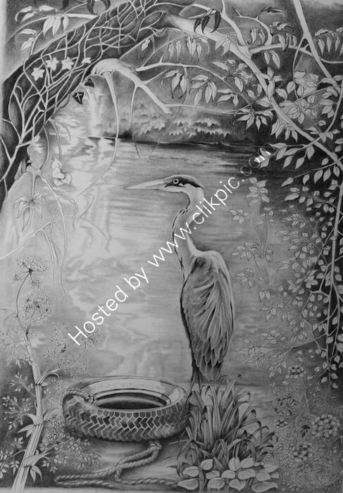 heron, pencil and graphite drawing, canal bank