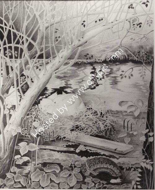 nesting swan, drawing, pencil