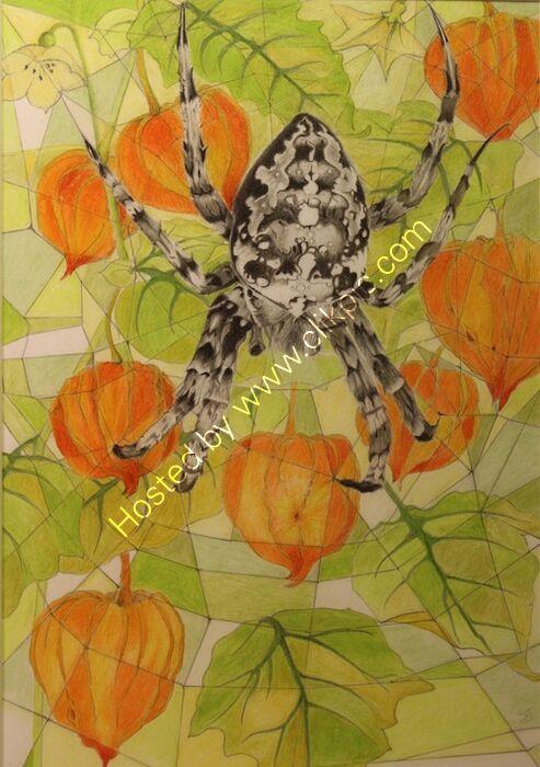 physalis and garden spider