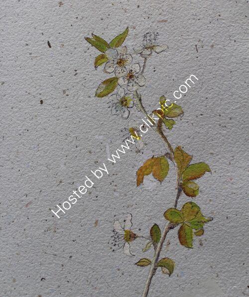 plum blossom twig