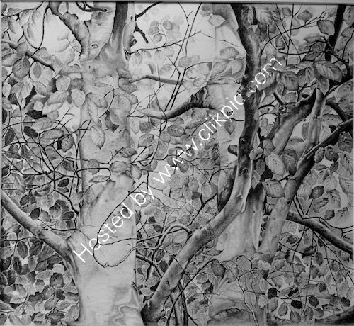 beech trees, pencil drawing