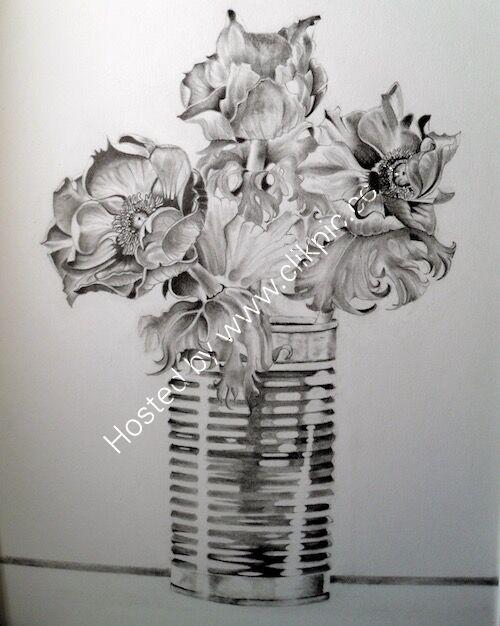 pencil artwork, anemones