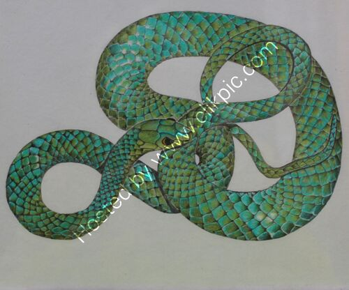 coloured pencil, drawing, green snake