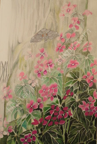 lunaria, honesty, oak tree, water-soluble pencil, drawing