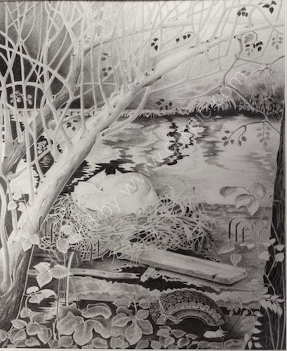 nesting swan, pencil drawing