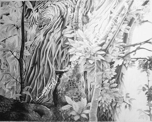 sweet chestnut tree, pencil drawing, surrey hills