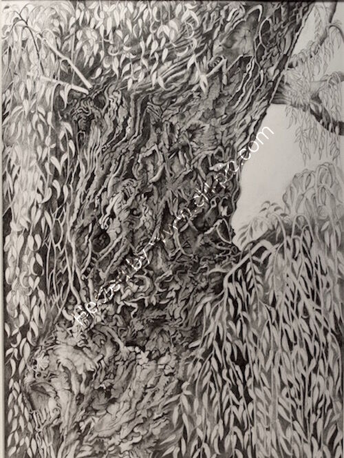 willow tree at Pyrford lock pencil drawing