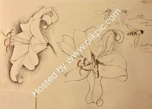 white lilies 1