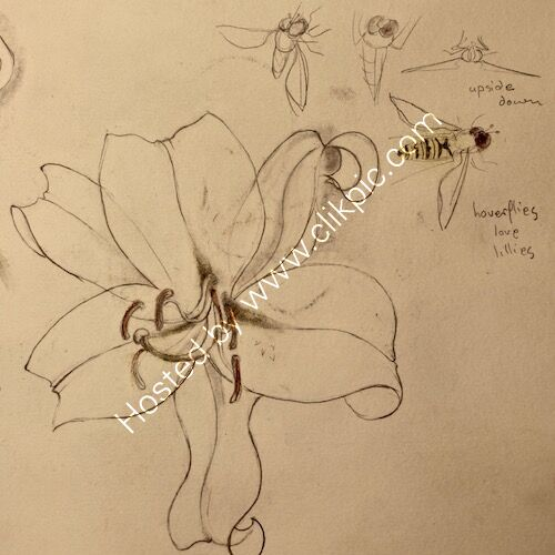 white lilies 2