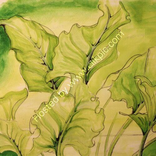 zantedeschia leaves