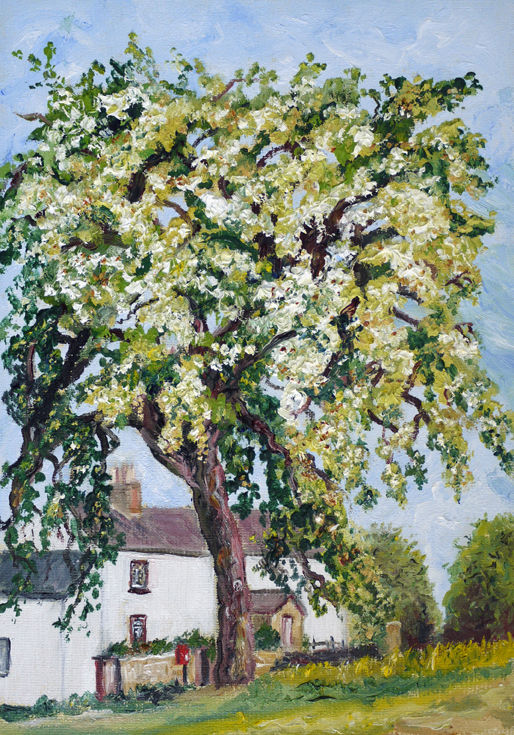 """THE OLD PEAR TREE"" OIL"