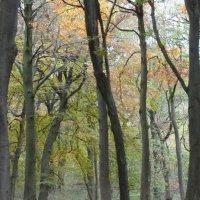 Grass Woods, Autumn