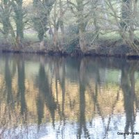 River Reflections IV