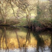 River Reflections V