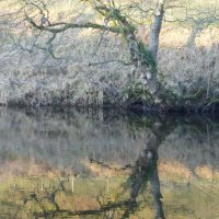 Tree Reflections I