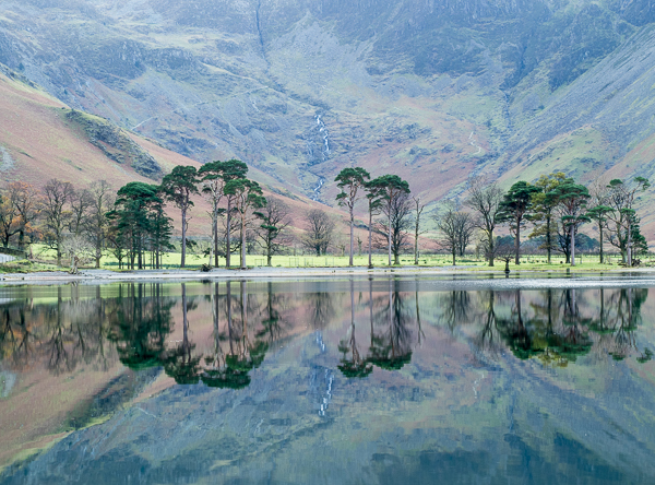 Buttermere trees 300083