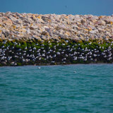 Sea Gulls on the breakwater - Cowes