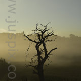 Dead Oak Tree Silhoutte