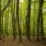 Woods - Wrotham Hill