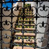 Painted steps - Capri