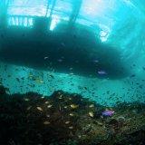 Dive Boat - Philippines