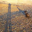 Beach shaddows