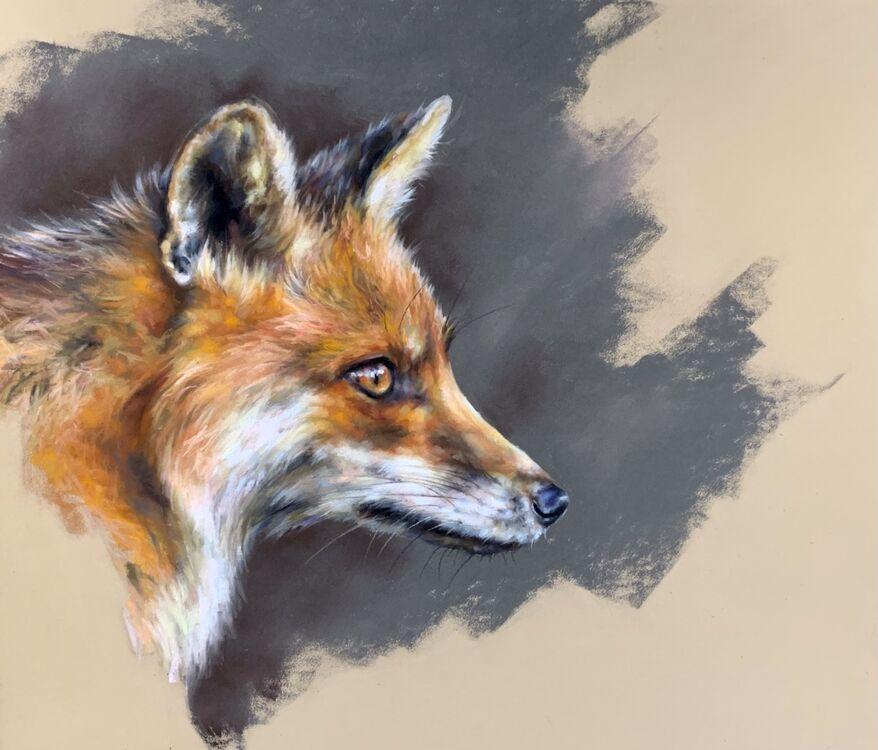 Fox Study 3