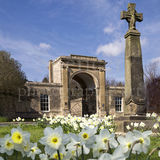 Rudding Gates - Daffodils