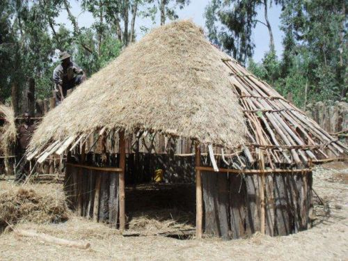 making the thatched roof